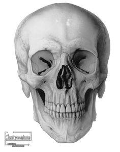 crane_humain_ossement_squelette_vue_de_face.png (Image PNG, 759 × 960 pixels) - Redimensionnée (72%)