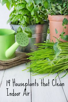19 houseplants that clean indoor air/Repinned via Decorget