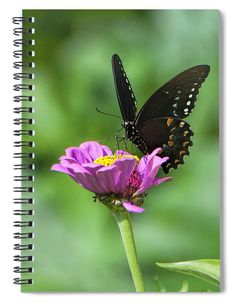 """This x spiral notebook features the artwork """"Black Beauty"""" by Phyllis Taylor on the cover and includes 120 lined pages for your notes and greatest thoughts. Notebooks For Sale, Lined Page, Fine Art America, Artists, Group, Inspired, Friends, Amazing, Artwork"""