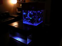 Awesome Reef tank blog.