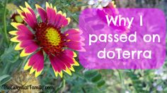 Why I passed on doTerra Essential Oils