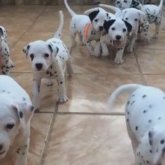 Home - Lovely Animals World Super Cute Dogs, Cute Baby Dogs, Cute Dogs And Puppies, Doggies, Cute Little Animals, Cute Funny Animals, Beautiful Dogs, Animals Beautiful, Fluffy Cows
