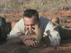 Meerkat Kisses (the real reason to become a scientist or cameraperson)
