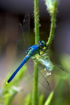 Dragonfly by Matt Pasant, via Flickr