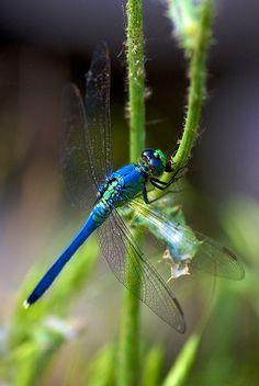 Dragonfly by Matt Pasant, via Flickr
