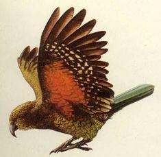 Native Birds of the New Zealand Forest Budgies, Parrots, Bird Sketch, School Murals, Maori Art, New Zealand Travel, Parakeet, Beautiful Birds, Photo Art