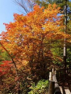This is a autumn color of primeval forest in the Yachiho Nature Park.  http://blogs.yahoo.co.jp/whfsc363/65931802.html