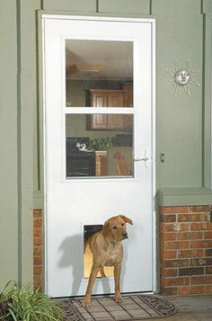Custom Doors With Doggie Door Jeld Wen 174 Steel And