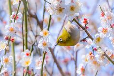 White-eye Photo by Y. Yamashita -- National Geographic Your Shot