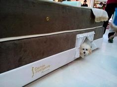 This doggie bunk bed within a human bed will have you and your pup sleeping in luxury!