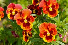 yellow, orange and red flowers