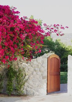 Bougainvillea--the thing all visitors ask about in SF. For some reason they do incredibly well here and can light up a whole block with color!