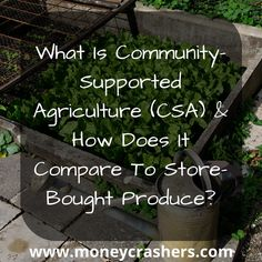 What Is Community-Supported Agriculture (CSA) – Comparison to Store-Bought Produce