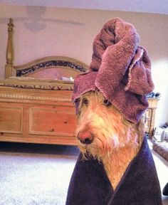 Here are some tips on how to start a self serve dog washing dog wash solutioingenieria Images