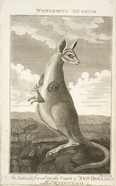 """""""The Wonderful kanguroo """" (kangaroo) from Botany Bay. From a magazine bound in a volume about the voyage from England to Botany Bay around 1789. From the collections of the Mitchell Library, State Library of New South Wales : http://library.sl.nsw.gov.au/search/t?extract%20of%20a%20journal,%20england%20to%20bot&searchscope=2"""