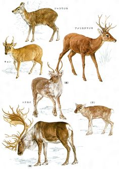 Tier Fotos, Animals And Pets, Draw Animals, Wildlife Art, Natural History, Animal Drawings, Conservation, Mammals, Goats