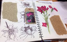 Observational drawings a-level textiles. cnc a level art sketchbook layout, a level A Level Textiles Sketchbook, A Level Art Sketchbook Layout, Gcse Art Sketchbook, Fashion Sketchbook, Sketchbooks, Natural Form Art, Art Alevel, Observational Drawing, Butterfly Drawing
