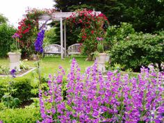 A beautiful Garden with and arbor and climbing roses #flowers #sunlight #homegarden