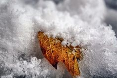 "gardenofgod: ""Leaf in Snow, by Tinx. """