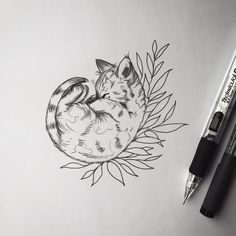 Cat pen drawing.