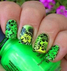 Nail Polish Forum • View topic - NOTD-Moyou London Tropical Collection