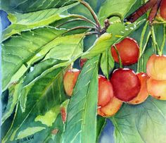 Original watercolor of ripenoing cherries on a by TivoliGardens, $100.00