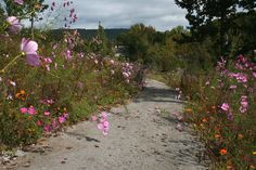 Walk through a path of flowers with the mountain scenery ahead. Downtown Chattanooga, Mountain Resort, Resort Style, Luxury Living, Paths, Scenery, Real Estate, Nature, Flowers