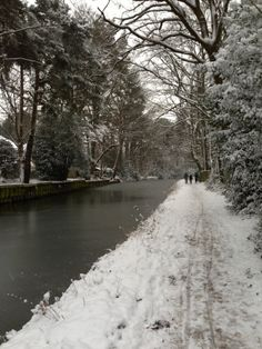 Basingstoke Canal in the snow