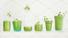 #Matcha smoothie with chia seeds  Matcha green vegan smoothie with chia seeds and mint in glasses and bottles white background. Clean eating detox alkaline diet weight loss food concept