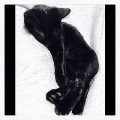 Snuggling his daddy's legs #black #cat # kitten #kitty #babyboy #blackcat #blackkitty #blackkitten #yelloweyes