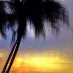 Light Impressions : Leaning palms