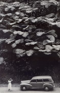 honey-kennedy-charles-allmon-martinique-rain-forest-national-geographic-1959