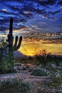 ~~Sonoran Sunrise ~ Sonoran Desert, Arizona by Saija Lehtonen~~
