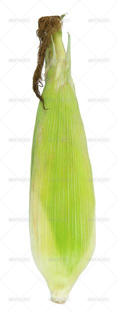 DOWNLOAD :: https://hardcast.de/article-itmid-1007664123i.html ... fresh corn ...  agriculture, background, corn, delicious, food, fresh, green, isolated, maize, raw, sweet, vegetable, white  ... Templates, Textures, Stock Photography, Creative Design, Infographics, Vectors, Print, Webdesign, Web Elements, Graphics, Wordpress Themes, eCommerce ... DOWNLOAD :: https://hardcast.de/article-itmid-1007664123i.html