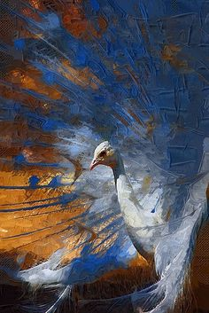 White Peacock painting by Allan Howell