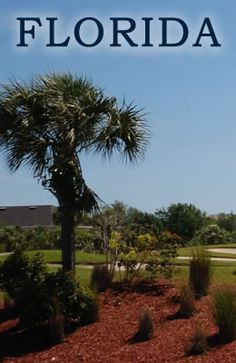 South Florida is a stunning tropical oasis full of lush mature pal trees! http://www.jupiterabacoahomes.us/