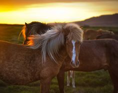 <h2>The Golden Horse in Iceland</h2> <br/>We worked on this one tonight in the webinar, and I hope people didn't get too bored.  It's very strange, because I am talking to myself for over an hour, and I only get occasional feedback when Andrea stops watching reruns of Ricki Lake.  Anyway, I'll just assume that people like seeing it, since people keep showing up.<br/><br/> - Trey Ratcliff <br/><br/>Read more <a ...