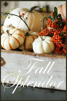 Gorgeous white pumpkins with intricate designs! I like the idea of filling a wooden box with them too. Maybe freshly dried flowers would add a nice touch too! - White pumpkins in a wooden box decor Thanksgiving Tablescapes, Thanksgiving Decorations, Seasonal Decor, Happy Thanksgiving, Holiday Decorations, Holiday Ideas, Fall Home Decor, Autumn Home, Fall Vignettes