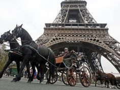 Kone pod Eiffelovkou - Cestovanie.sk