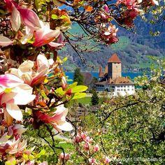Spiez Castle, Lake Thun