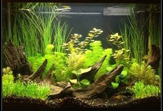 29 gallon tank- like the decorations and what I think are live plants