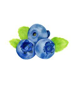 Blueberries Fruit Illustration Art Print