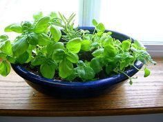 5 Garden Herbs for DIY Skincare - mint (toner), basil (acne & blemish), chamomile (inflammation), etc