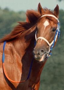 Gorgeous Secretariat Forever in our hearts and one of two of my favorite horses of all time!  Barbaro would be the other!