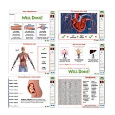 Interactive Whiteboard Digital Lesson Plan - Circulatory, Digestive & Reproductive Systems