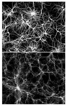 (Top) Brain Cells, (Bottom) Galaxy Cluster.  We know nothing of depth.