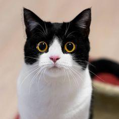 いいね!16.7千件、コメント182件 ― Izzy & Zoë The Catsさん(@izzyandthefluff)のInstagramアカウント: 「Happy Whiskers Wednesday everyone.」