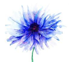 Blue Colored Cornflowers, watercolor illustration