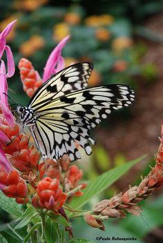 Butterfly by Paula Rabasquinho