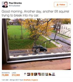 30+ Most Hilarious Twitter Dump Memes Pictures - Disqora Funny Animal Pictures, Funny Animals, Cute Animals, Weird Pictures, Fail Pictures, Baby Animals, Most Famous Memes, Cat Memes, Funny Memes